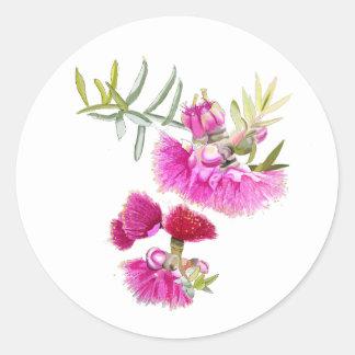 Australian Pink Gumnut Flower Wildflower Classic Round Sticker