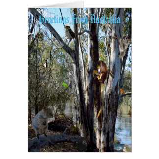 Australian Quokka Family In The Outback, Card