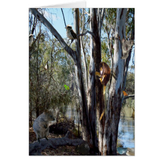 Australian Quokka Family In The Outback, Small Card