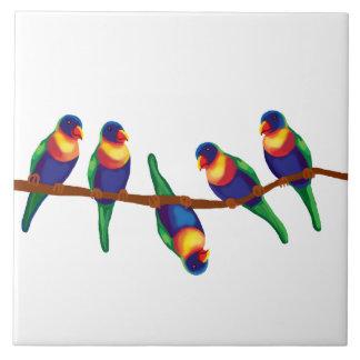 Australian rainbow lorikeets tile