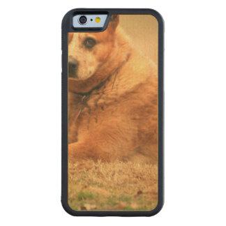 Australian Red Cattle Dog Maple iPhone 6 Bumper