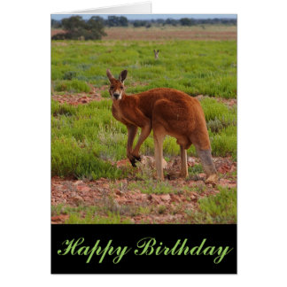 Australian red kangaroo blank birthday card