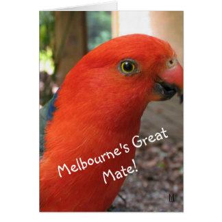 Australian Rosella Gift Card