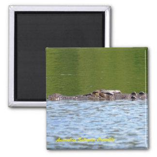 Australian Saltwater Crocodile Square Magnet
