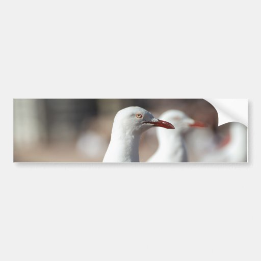 Australian seagulls at Sydney Harbour Bumper Stickers