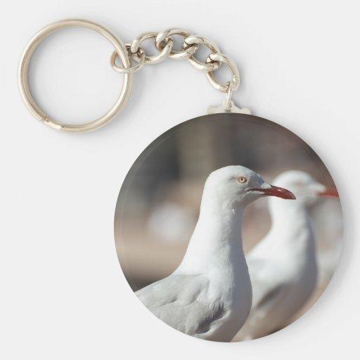 Australian seagulls at Sydney Harbour Key Chains