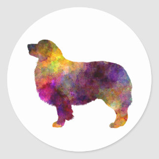 Australian Shepherd 01 in watercolor 2 Classic Round Sticker
