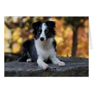 Australian Shepherd Aussie  Dog  Hello  Friendship Card