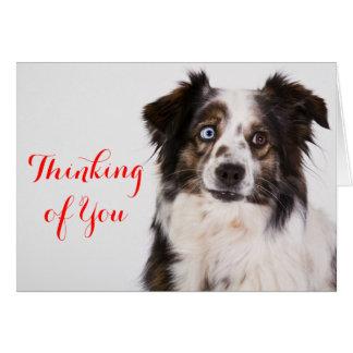 Australian Shepherd Aussie  Dog  Thinking Of You Card