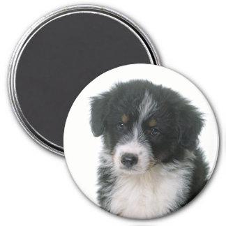 Australian Shepherd Aussie Puppy Dog Magnet