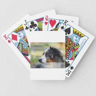 australian-shepherd bicycle playing cards