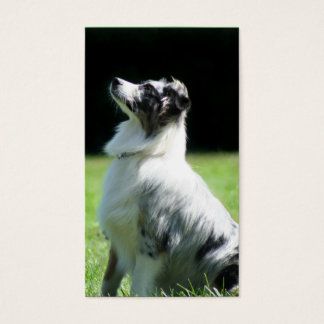 Australian Shepherd business cards
