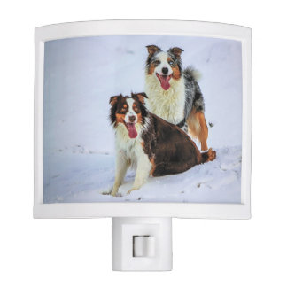 Australian shepherd couple dogs night lite