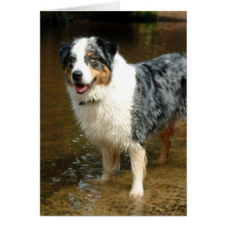 Australian Shepherd Dog Card