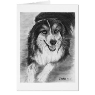 Australian Shepherd Drawing Card