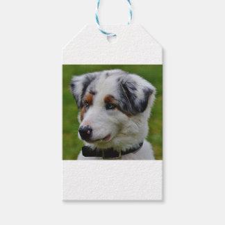 Australian Shepherd Gift Tags