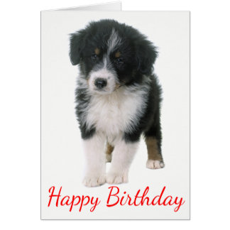 Australian Shepherd Happy Birthday Puppy Dog Card