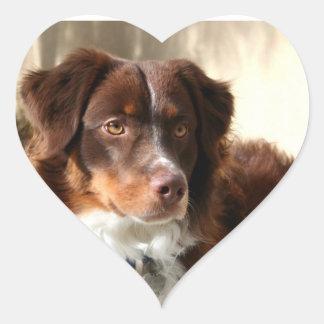 Australian Shepherd Heart Sticker