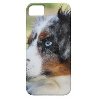 australian-shepherd iPhone 5 case