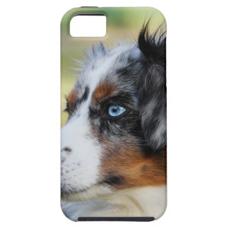 australian-shepherd iPhone 5 cover