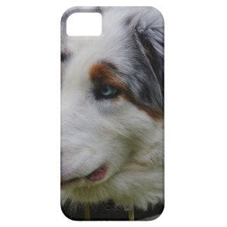 Australian Shepherd iPhone 5 Cover