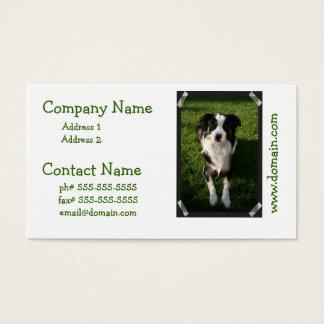 Australian Shepherd Photo Business Card