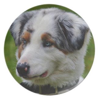 Australian Shepherd Plate