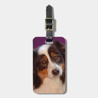 Australian Shepherd portrait Luggage Tag