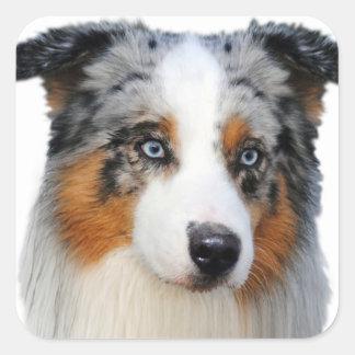 Australian Shepherd Portrait Square Sticker