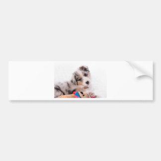 Australian shepherd puppy bumper sticker