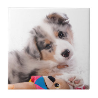 Australian shepherd puppy ceramic tiles