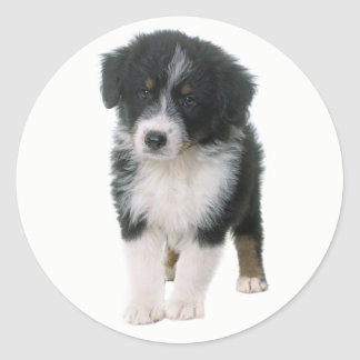 Australian Shepherd Puppy Dog Love Aussie Classic Round Sticker