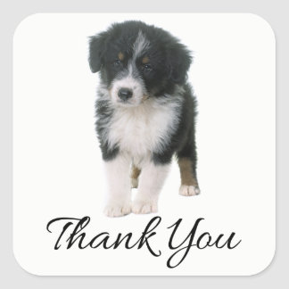 Australian Shepherd Puppy Dog Thank You - Aussie Square Sticker