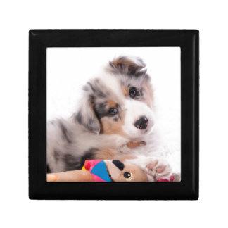 Australian shepherd puppy gift box