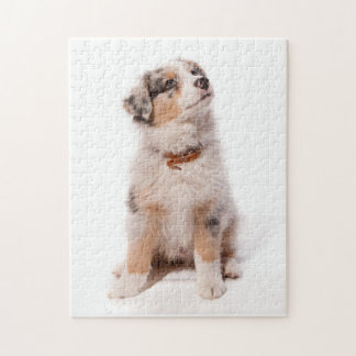 Australian shepherd puppy jigsaw puzzle