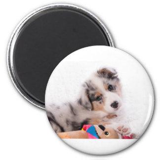 Australian shepherd puppy magnet