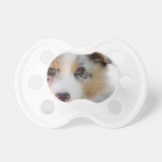 Australian shepherd puppy pacifier