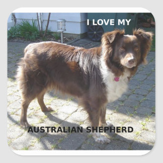 australian shepherd red tri love w pic square sticker