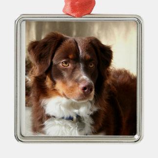 Australian Shepherd Silver-Colored Square Ornament