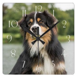 Australian Shepherd Square Wall Clock