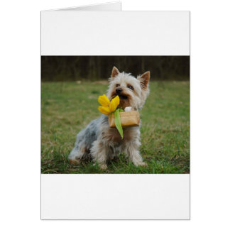 Australian Silky Terrier Dog Card