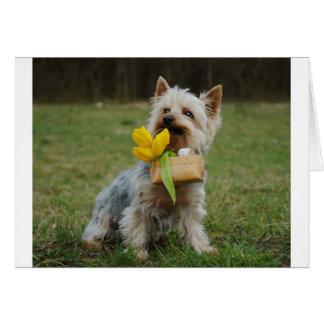 Australian Silky Terrier Dog Card