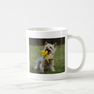 Australian Silky Terrier Dog Coffee Mug