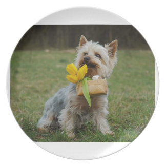 Australian Silky Terrier Dog Party Plates