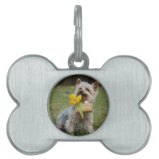 Australian Silky Terrier Dog Pet Tag