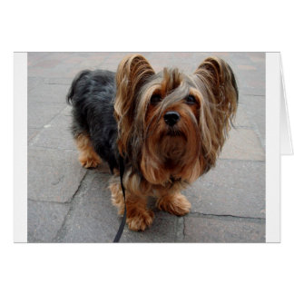 Australian Silky Terrier Puppy Dog Card