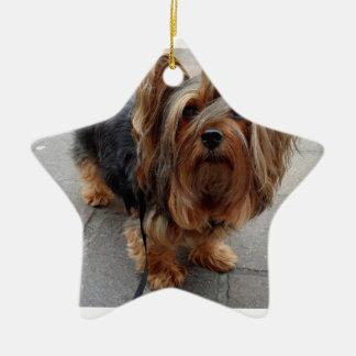 Australian Silky Terrier Puppy Dog Ceramic Star Ornament