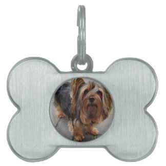 Australian Silky Terrier Puppy Dog Pet Tag
