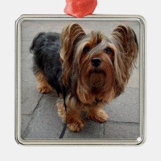 Australian Silky Terrier Puppy Dog Silver-Colored Square Ornament