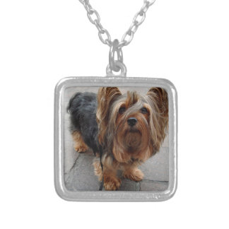 Australian Silky Terrier Puppy Dog Silver Plated Necklace